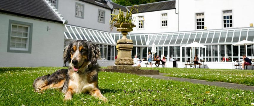 Barony Castle - Dog Friendly